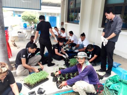 กปภ.สาขากุยบุรี ดำเนินโครงการ CSR ปลูกดอกดาวเรืองเพื่อรำลึกพระมหากรุณาธิคุณพระบาทสมเด็จพระเจ้าอยู่หัวภูมิพลอดุลยเดช