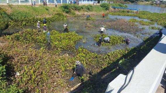 กปภ.สาขาพิมายร่วมกิจกรรมขุดลอกคูคลอง กำจัดผักตบชวาและวัชพืช